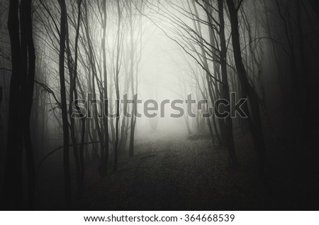 dark road in forest at night - stock photo