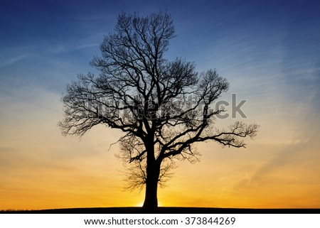 Dark silhouette of a tree at orange sunset - stock photo