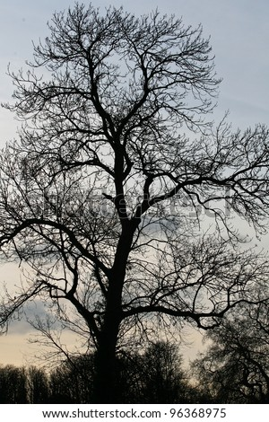 dark silhouette of a tree in winter's afternoon, - stock photo