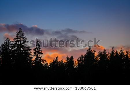 dark silhouettes of firs on sunset sky background - stock photo