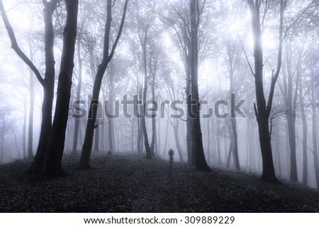 Dark spooky forest - stock photo
