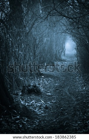 Dark spooky passage through the forest, toned blue - stock photo