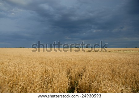 Dark storm clouds hover low over a golden wheat crop.