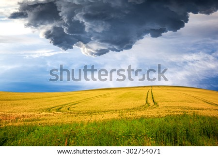 Dark stormy clouds over wheat field. - stock photo