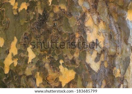 Dark sycamore bark background - stock photo