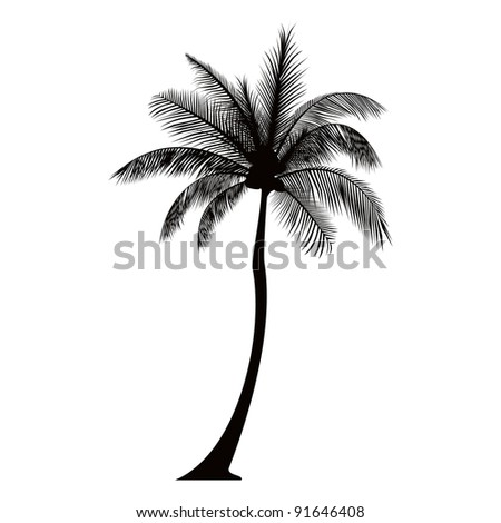 Tall Trees Drawing Royal Palm Tree Drawing Dark