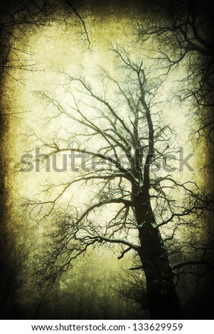 dark textured picture from tree tops without leaves in a wintry surrounding - stock photo