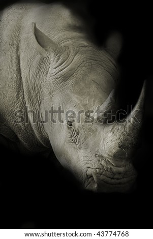 Dark toned image of a White Rhino