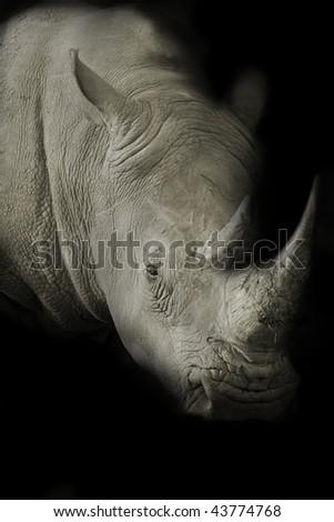 Dark toned image of a White Rhino - stock photo