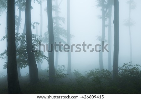 Dark trees in blue fog - stock photo