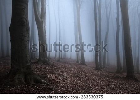 Dark trees in creepy fog during autumn - stock photo