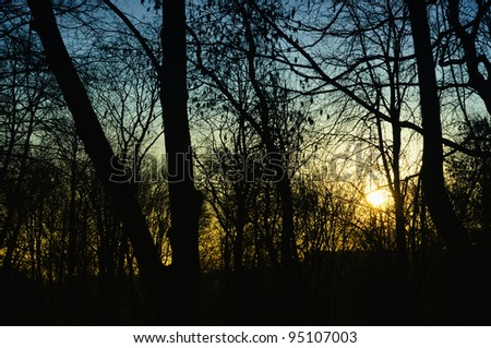 Dark Trees in the Forest Lit by the Setting Sun - stock photo