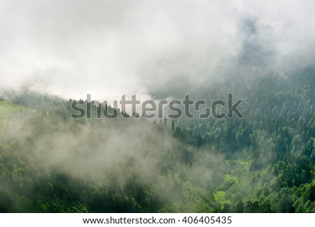 Dark view of mountain forest tree with dramatic heavy clouds. Forest tree landscape. Mountain forest tree. Tree forest. Landscape tree in mountain forest. Pine tree forest. Tree forest. - stock photo