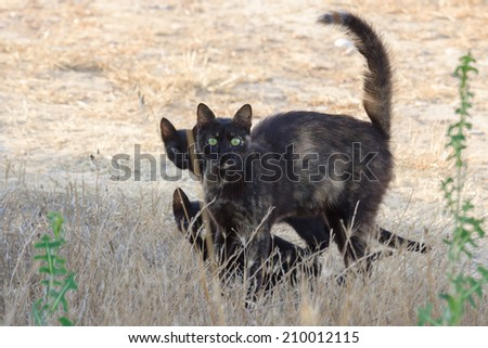 Dark wild kitty with some cubs in a grass