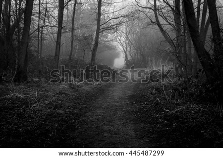 Dark wood on a foggy day, path leads off in to the distance to the unknown