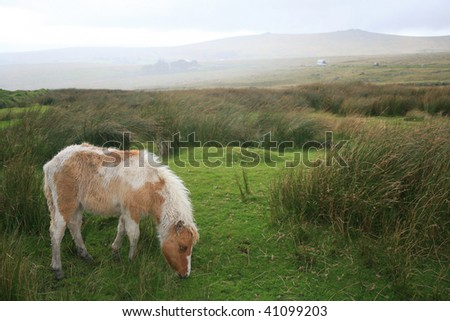 Dartmoor pony at King's Tor