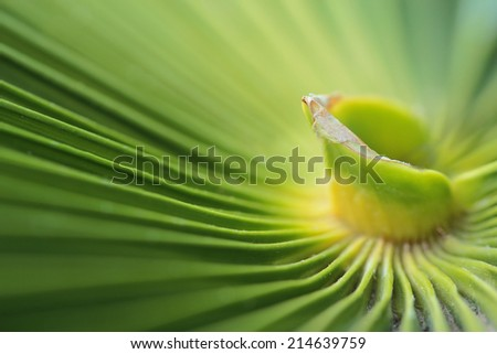 Date palm leaf - stock photo