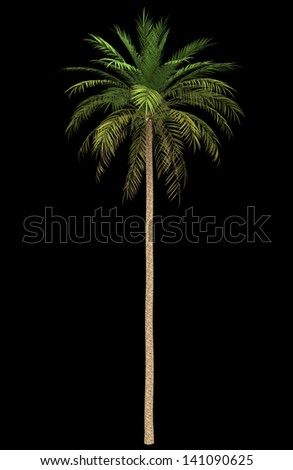date palm tree isolated on black background - stock photo