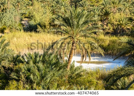 Dates plantations and salt lake with mountains in the background, Garmeh, Iran