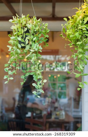 Dave tree hanging in front of the coffee shop. - stock photo