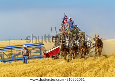 Davenport, WA. USA - Aug 22, 2015. An image of an old fashioned harvest using horses at the Davenport, Washington Vintage Harvest August 22, 2015. - stock photo