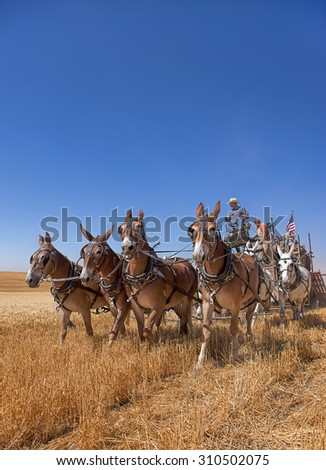 Davenport, WA. USA - Aug 22, 2015. An image of an old fashioned harvest using horses at the Davenport, Washington Vintage Harvest August 2, 2015. - stock photo
