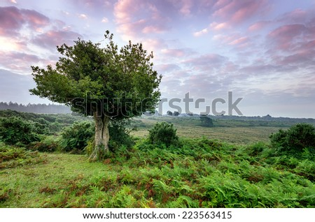 Dawn in the New Forest National Park - stock photo
