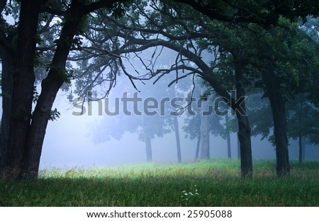 Dawn light shining in the forest with a blue misty fog. - stock photo