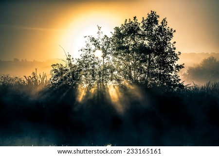 dawn light through the bush on the river bank - stock photo