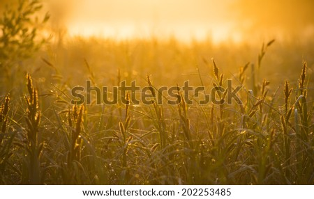 Dawn on a meadow and the sun's rays on a blurred background  - stock photo