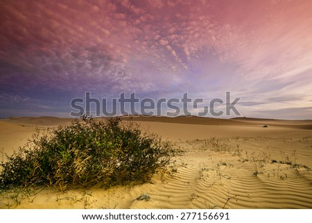 Dawn on the sand dunes - stock photo