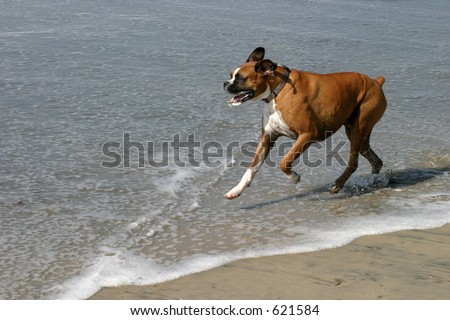 Day at the Dog Beach - stock photo