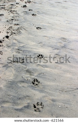 Day at the Dog Beach, man and best friends foot prints