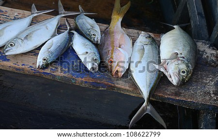day fishing in the Caribbean Sea - stock photo