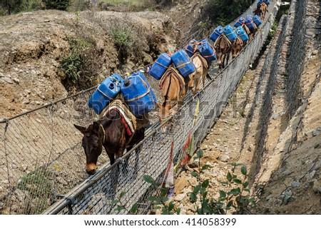Day 1 of EBC Trek:  Horses crossing a suspension bridge - stock photo