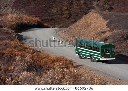 Day trip into Denali National Park on a shuttle bus Alaska North America - stock photo