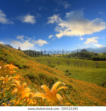 Daylily flower at sixty Stone Mountain in Taiwan Hualien festival - stock photo