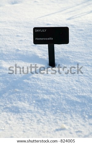 Daylily marker protruding from snow