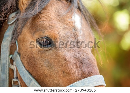 Daytime Close Up Shot of a Brown Horse - stock photo