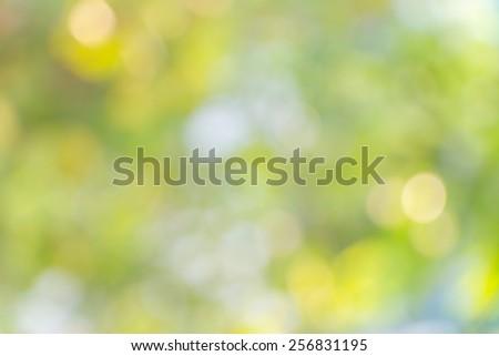 De focus of  Nature bokeh, blurred background - stock photo