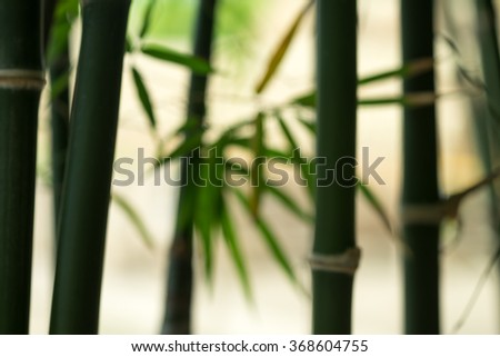 De focused or blurred green bamboo plant for nature background