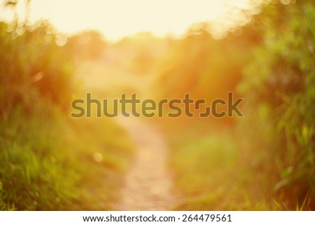 De focused path on sunset, natural bokeh background  - stock photo