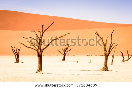 Dead Acacia erioloba in the Dead Vlei (Dead Valley), Namibia Desert, Africa - stock photo