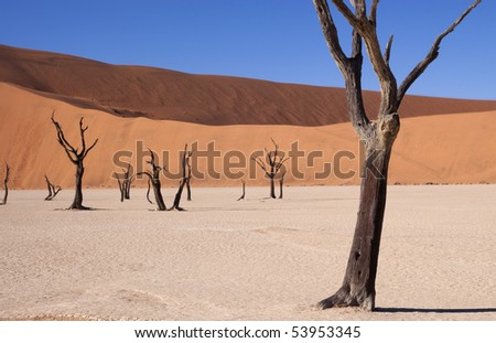 Dead acacia tree at dead vlei in Namibia - stock photo