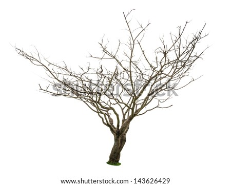 Dead and dry tree is isolated on white background. - stock photo