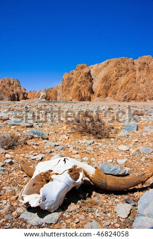 dead animal in the middle of wasteland - stock photo