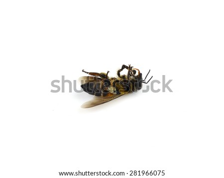 Dead bees isolated on white background - stock photo