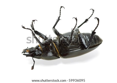 Dead beetle  isolated on the white background - stock photo