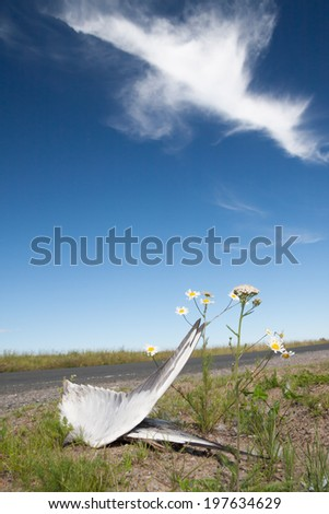 Dead bird wings and flowers side of the road - stock photo