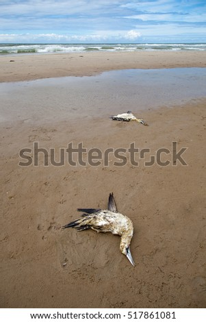 dead birds on the beach